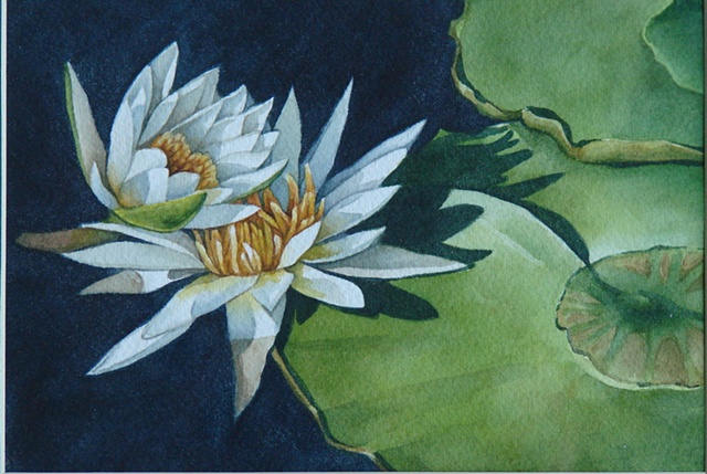 Waterlilies White - Framed