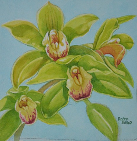 Orchids Lime