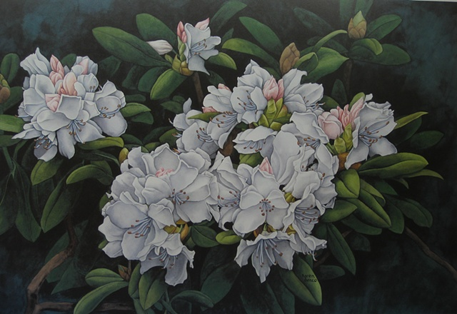 Rhododendron-Print Only