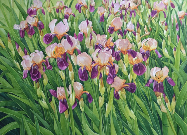 Irises-Peach Purple-Framed