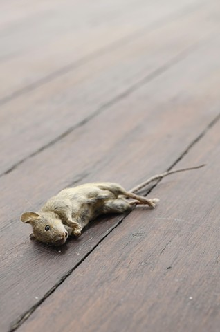 A dead mouse and a broken coffee machine (detail)