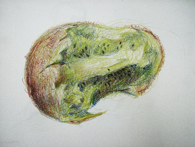 Kiwi Fruit Sketch Drawing of Bitten Kiwi Fruit