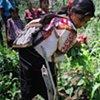 Family garden harvest, Nuevo San Ildefonso, 2011