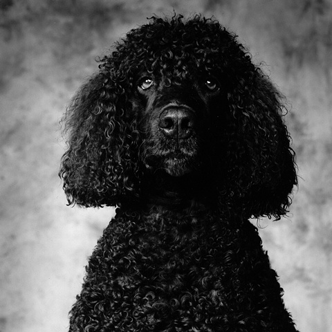 Photograph of dog, fine art, fine art print, Steamboat Springs, Colorado by JoAnn Baker Paul