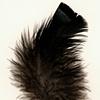 Turkey Feather (No.27)
