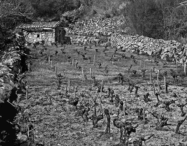 """""""Vineyard with Shed - 2""""  Small vineyards such as this one are very common in Galicia.These vineyards become beehives of activity during vendimia (grape harvest)."""
