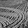 """Tracks""  A field newly ploughed for planting potatos."