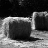 """Rolls of Hay in Sun""  A typical sight in the field in Galicia in summer."