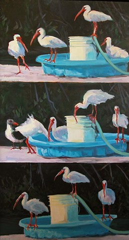 Ibis, Key Largo, triptych, wildlife, nature, acrylic, painting on canvas