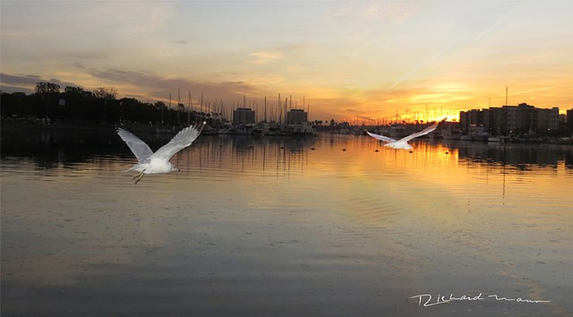"""Fly By""  Marina Del Rey Sunrise  2/13/14  6:00 AM"