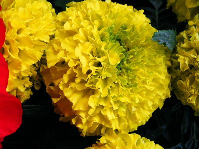 flowers, yellow, nature, greeting cards, photo greeting cards, photography