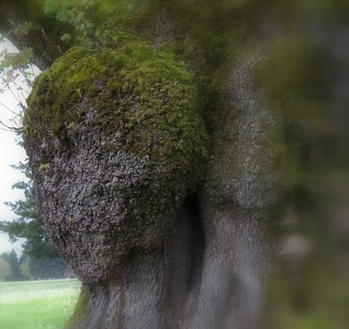 Face in the tree.
