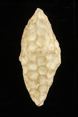 Honeycomb Pod