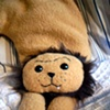 Rodger the Lion