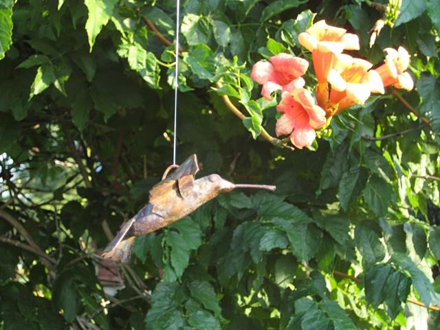 custom hand made hammered copper hummingbird by  tim summerville artist