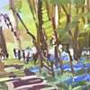 Bluebell Woods No.1