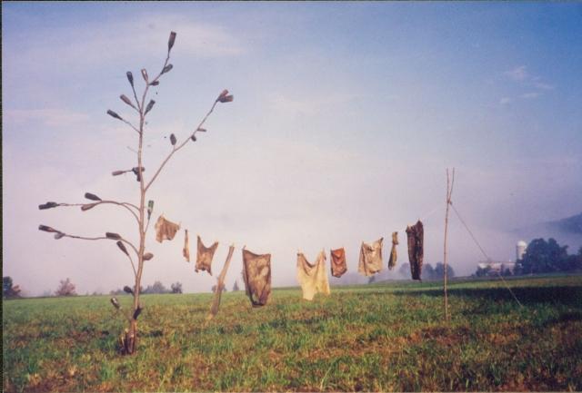 River Laundry, Bottle Tree