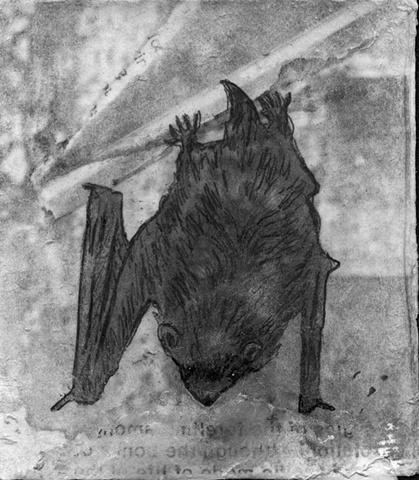 bat outdoors nature