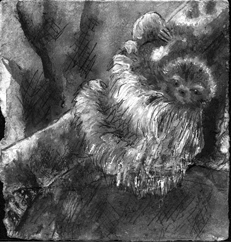sloth jungle animal sleepy art