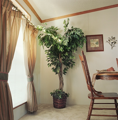 Ficus tree in dining room, manufactured display home, © Amy Eckert www.amyeckertphoto.com
