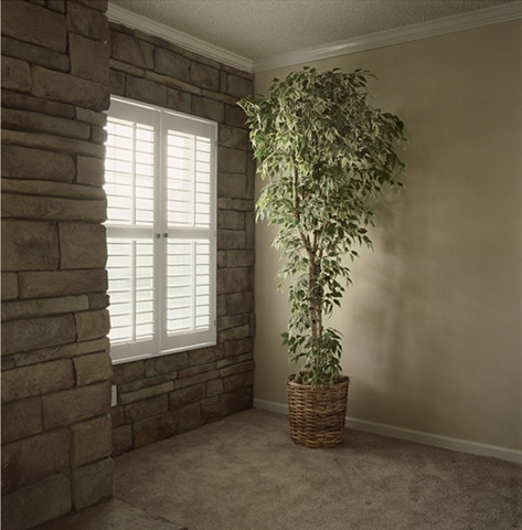 Ficus tree in living room, manufactured display home, © Amy Eckert www.amyeckertphoto.com