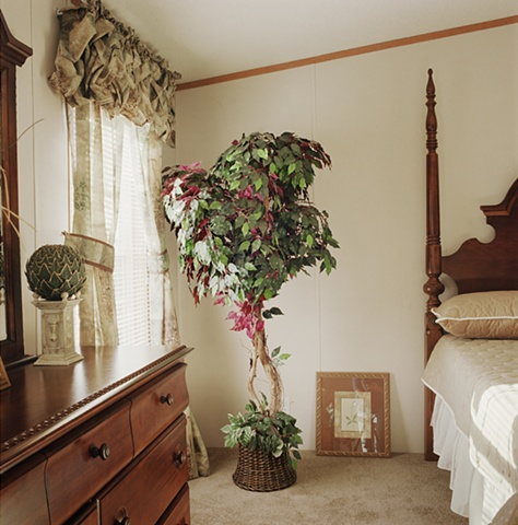Ficus tree in bedroom, manufactured display home, © Amy Eckert www.amyeckertphoto.com