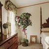 Master Suite Ficus