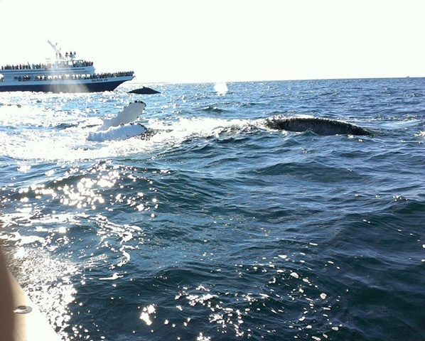 this humpback just popped up next to our stationary boat