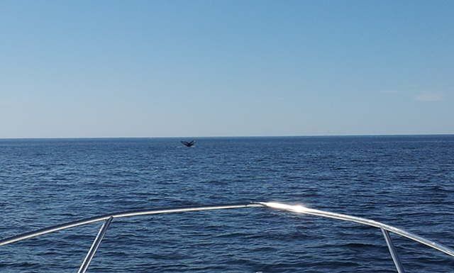 cell phone cameras, while cool, leave a little to be desired w/ whale watching