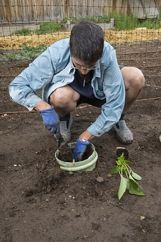 Steph Planting a Pepper