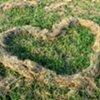 Hay Day Heart