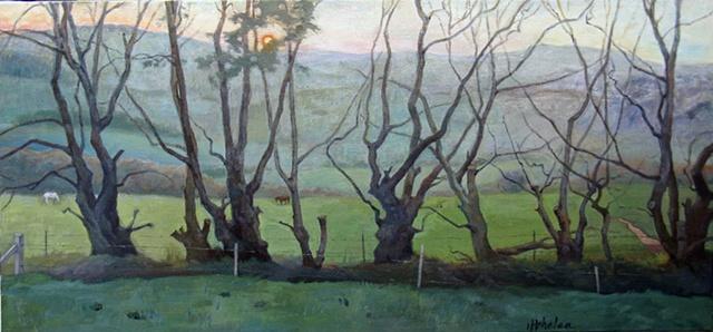Cork, Ireland landscape at dawn, windbreak of old rowan trees