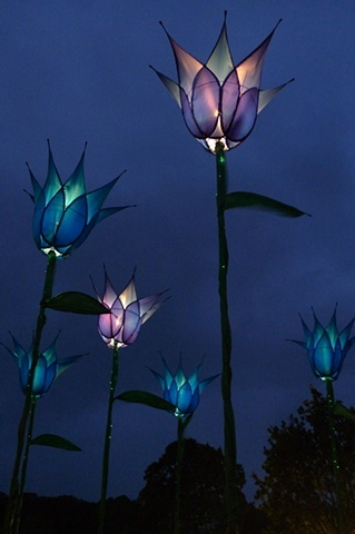 giant blue tulips