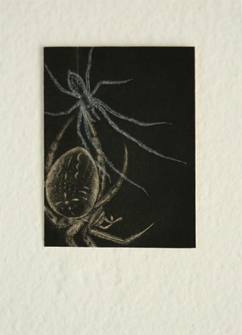 spiders, mezzotint, metal engraving, printmaking