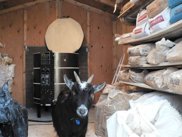 Lucy in the Kiln Shed