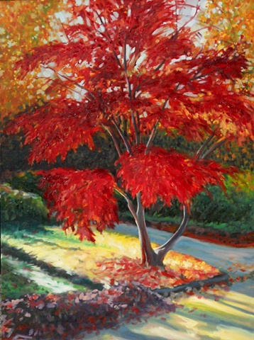 Original oil painting of a Japanese Maple tree by Katie Wall Podracky