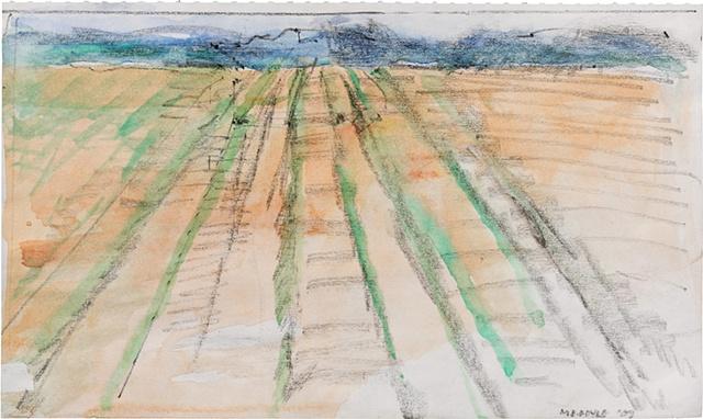 Rows of Corn