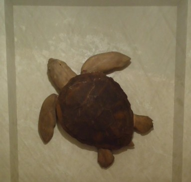 Loggerhead Turtle Sculpture for a private residence.