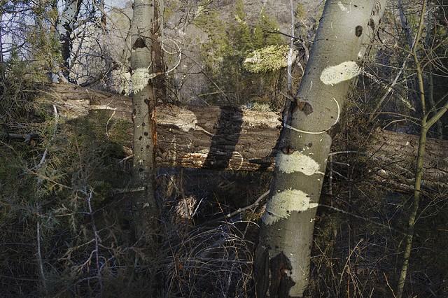 Brush Creek Ranch #4838-2832