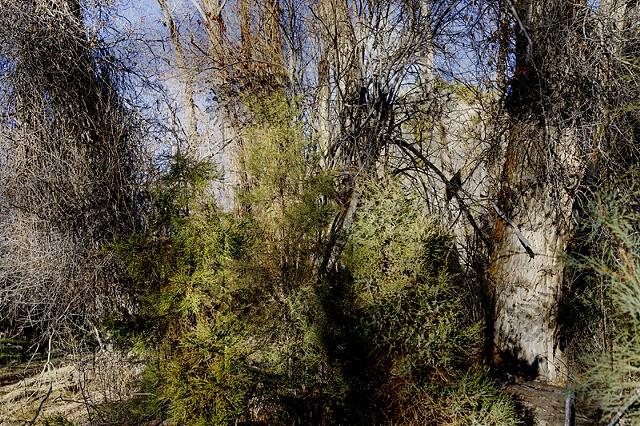 Brush Creek Ranch #5573-2756