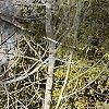 Brush Creek Ranch #5594-2826