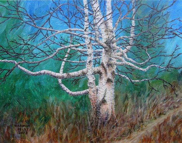 painting of an old birch tree on Swine Flu hiking trail at Fernie, B.C.
