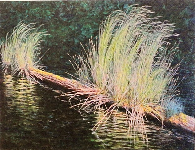 A painting of a partly submerged log which supports growing grass on a lake near Fernie, B.C. in the Rockies.