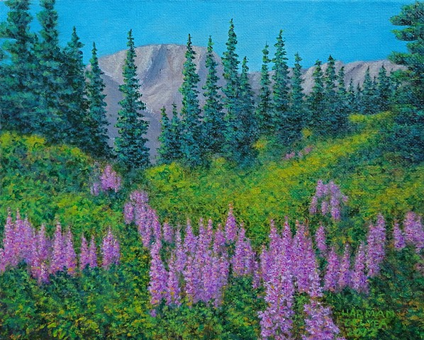 Painting of summer fireweed in Timber Bowl at Fernie Alpine Ski Resort near Fernie, B.C.