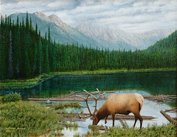 A painting of a large elk at Munroe Lake, near the headwaters of the White and Bull Rivers, in the Canadian Rocky Mountains.