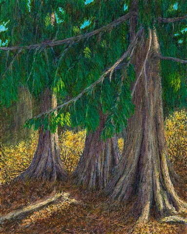 Painting of hundred year old cedar trees on the Lizard Range Gorby Trail near Fernie, B.C