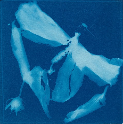 Cyanotype with Spider