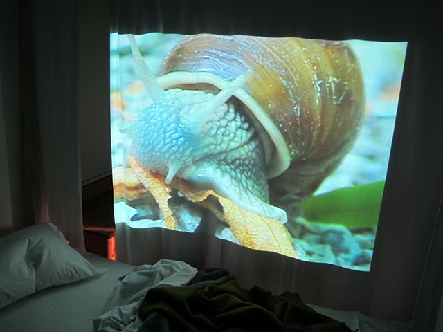 """Lumaca"" video installation"