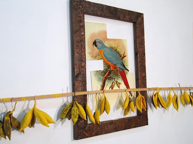 "Water Kerner ""Extinct Red Tailed Macaw"" painting"