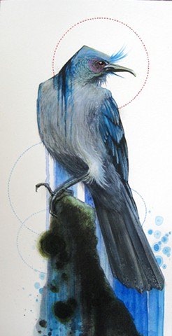 steve Cross, Blue bird, print, mrstevecross, artist steve cross